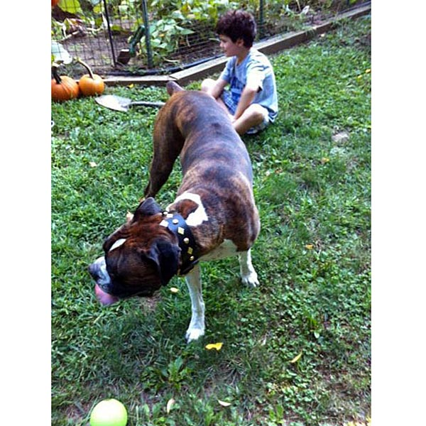boxer-named-loui-sq.jpg