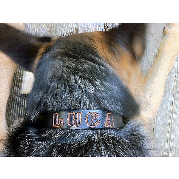 luca-image-sq.jpg