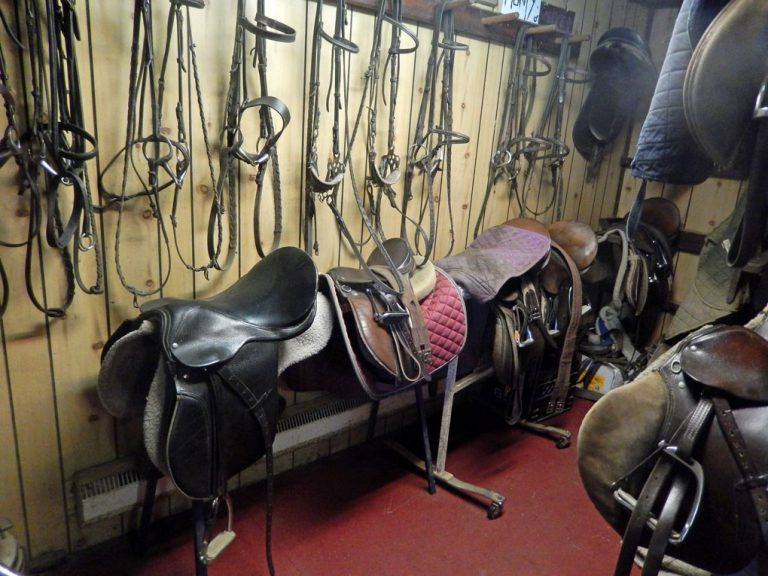 Saddle room with lots of leather bridles hanging